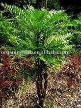 Eurycoma Longifolia Jack Extract Powder 200:1