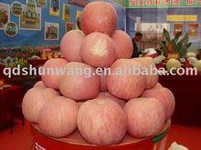 yantai class A fresh red fu ji apple