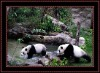 New panda plastic 3D animal printing picture