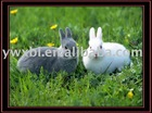printing 3D plastic Picture of rabbits