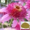 Healthy industries Raw Material Echinacea Purpurea P.E. Cichoric Acid 4% HPLC From Manufacutrer