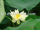 GUANGZHOU/FOSHAN/SHENZHEN/SHANGHAI/NINGBO TO SURABAYA (shipping service and to door service ) -----kelly