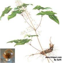 Pharmaceutical Raw Material Yellowish Brown Powder Epimedium Extract Icarrin 60% HPLC