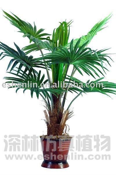 Piante da esterno, esterno artificiale pianta di palma