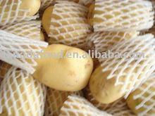 China Fresh sweet potato