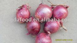 chinese fresh shallot onions
