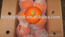 fresh pumpkin(chinese)