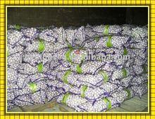2011 fresh garlic (new crop)
