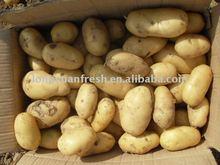 fresh new crop small size Chinese yellow potato