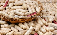 Popular peanut oil flavour in beverage