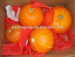 fresh red pumpkin (new)