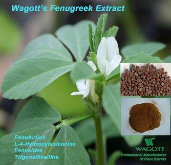 FenuAction(L-4-Hydroxyisoleucine, Fenusides,Fenugreek Extract)