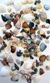 conchas do mar produção de artesanato