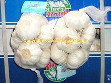 2011 Good Seed Garlic--High Quality & Low Price