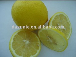 Fresh Eureka Lemon