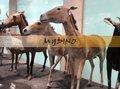 parque de atracciones de los animales caballo