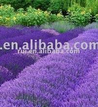 lavender oil (linalyl acetate>60% volatile oil 99%)