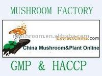 mycelium powder,mushroom mycelium extract.;mycelium