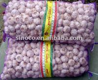 China Good Quality Garlic
