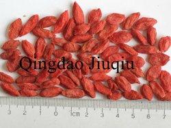 chinese fresh goji berry fruit
