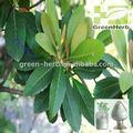 O ácido ursólico loquat folha