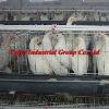 hot galvanized layer chicken cage