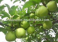 2011 New Granny Smith/ Green Apple