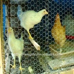 animal cage /chicken cage/bird cage Hexagonal wire mesh