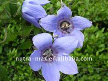 Radix codonopsis pilosulae