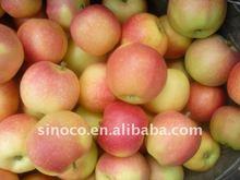 fresh gala apple