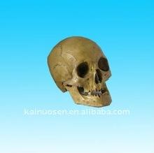 resin halloween skull