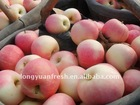 2011 crop Chinese sweet crispy red Gala apple
