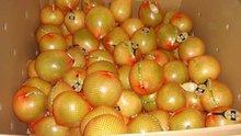 pomelo orange /chinese pomelo fruit