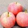 Gala Apple, Chinese Fresh Apple, fresh gala apple
