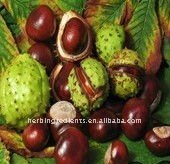 natural Horse Chest Nut P.E/Horse Chest Nut Extract