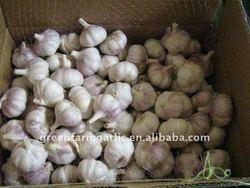 Jinxiang White Garlic Suppliers