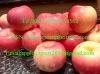 2011 Yantai Fresh Fuji Apple