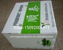 PP Corrugated Plastic Fresh Ginger Box