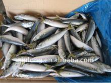 seafood frozen mackerel fish in new