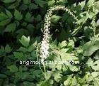 Organic Black cohosh Extract