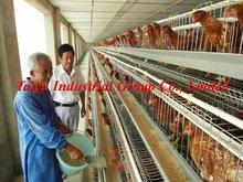 Poultry farm design ( production, equipment )