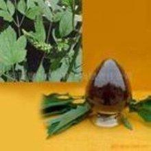 Black Cohosh Extract/Triterpene Glycosides 5%