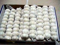 China Garlic 5.5cm