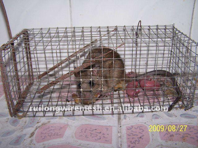 Mouse contral gaiola / galvanizado rat pegar cage / floded gaiola de ratos