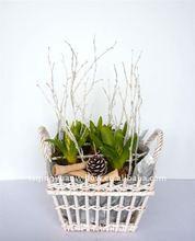 salice cestino storagr per il fiore