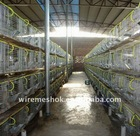 Metal rabbit cage breeding