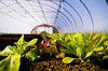 Service Provider for Drip irrigation & fogging system for Greenhouse