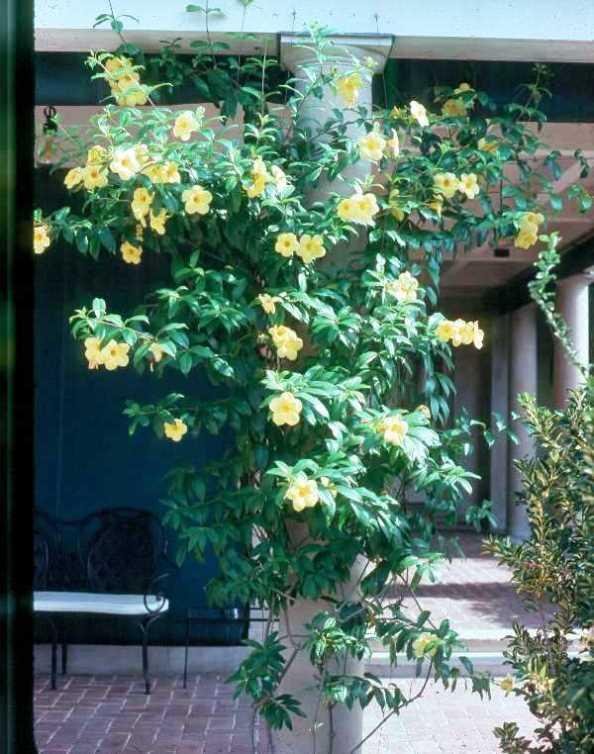 Cardosanto Seeds Marathi