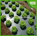 農業の野菜フルーツpp不織布