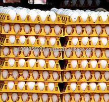 Export Chicken Eggs